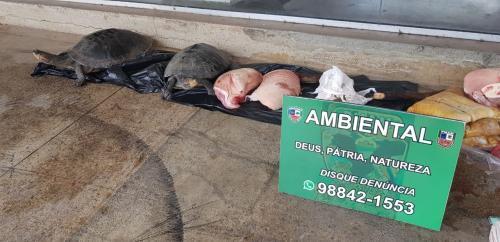 Batalhão apreende pescados, quelônios e carne de caça ilegal na Manaus Moderna