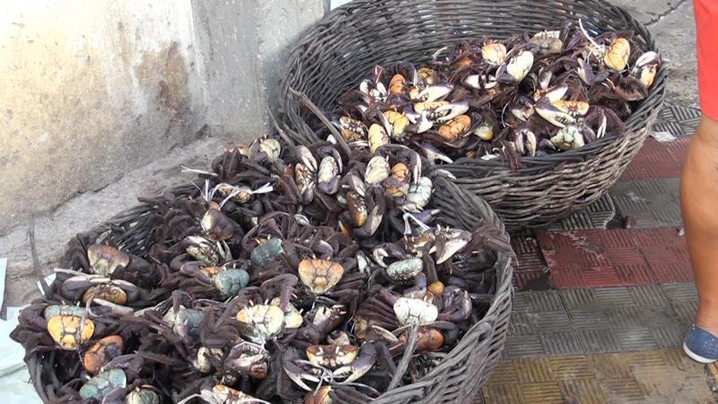 Não tem crime ambiental quando há soltura pela autoridade fiscalizadora dos caranguejos apreendidos com pescador
