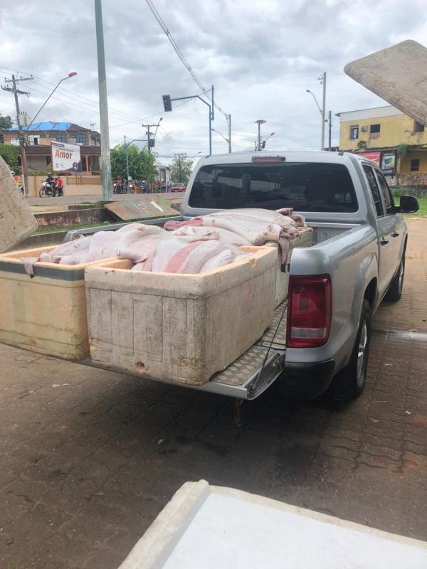 Mais de 5 toneladas de pirarucu foi aprendido na cidade de Tefé