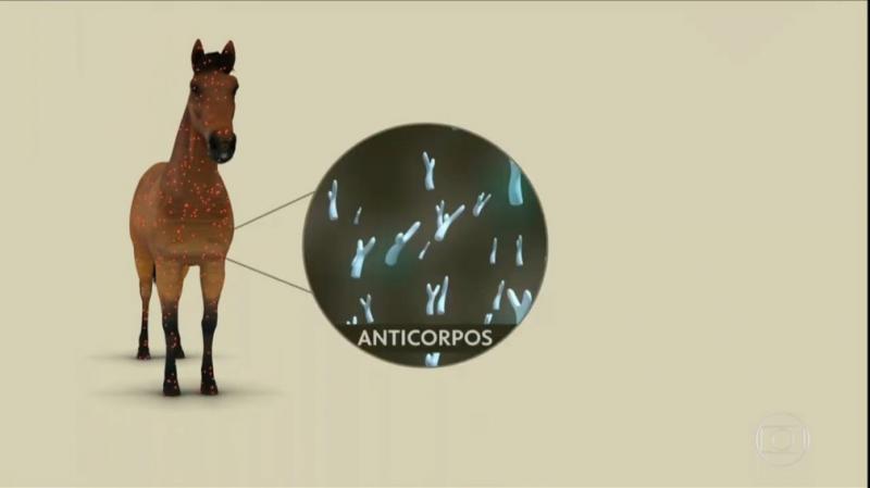 Soro contra a Covid-19 feito com plasma de cavalo será testado em humanos na Argentina