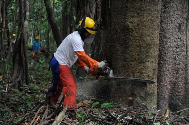 Governo do Amazonas publica Plano de Outorga para viabilizar manejo florestal em Unidades de Conservação