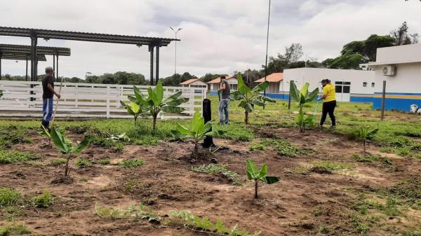 Fazenda Municipal Luiz Medeiros é arborizada com espécies frutíferas na Vila Amazônia