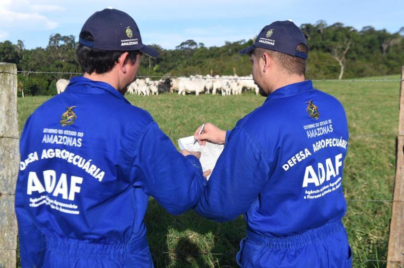 Vacinação contra febre aftosa inicia em oito municípios do Amazonas