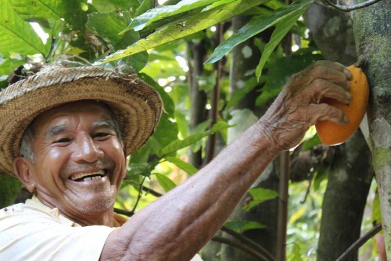 Governo do Amazonas anuncia projeto de beneficiamento de amêndoa e polpa de cacau