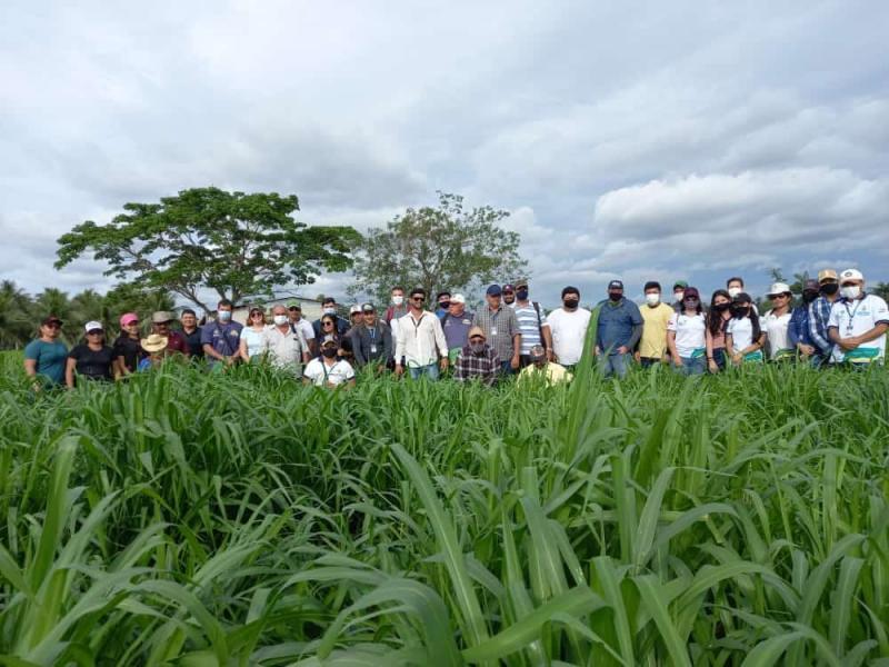 IDAM capacita equipes técnicas em Pecuária Sustentável