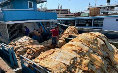 Operação Marchantaria apreende 20 toneladas de pescado ilegal