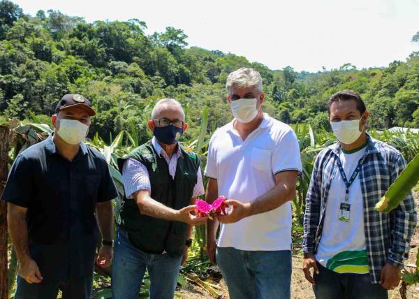 Governo do Amazonas realiza visita técnica em produção de pitaya visando expansão desse cultivo no estado