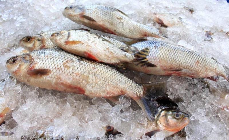 Nota técnica conjunta reforça que não há restrição ao consumo de pescado oriundo da piscicultura